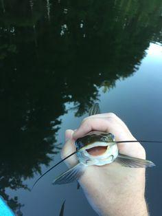 Ridiculously Photogenic Catfish