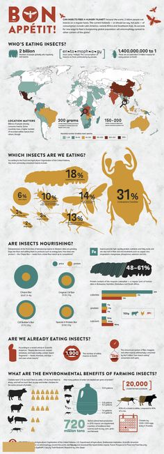 who is eating insects ? #Infographic