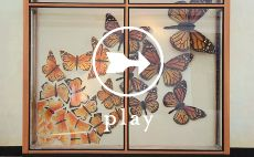 Metamorphosis: The Making of Our Earth Day Windows It is awe-inspiring to think that the monarch. Stage Background, Arts And Crafts, Diy Crafts, Gnome Garden, Monarch Butterfly, Earth Day, Beautiful Butterflies, Art Photography, Windows