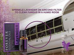 Cseppents pár csepp Forever Essential Oils Lavender levendula illóolajat a légkondicionáló szűrőjére, hogy kiirtsd a gombákat a szobából!   https://www.youtube.com/watch?v=9gcr8L_EEI4 Többet tudnál, megvennéd? http://www.flpshop.hu/customers/recommend/load?id=ZmxwXzY5MTM= http://gaboka.flp.com/products.jsf Segítsünk? gaboka@flp.com