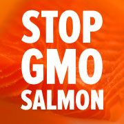 Tell the FDA: No GMO Salmon in the US | AquaBounty, the company creating the first-ever genetically modified salmon for human consumption, is playing fast and loose with environmental regulations, and we may end up paying the price. The Panamanian government fined AquaBounty for repeated violations of environmental regs at its breeding facility, which is located in Panama to avoid scrutiny from US regulators. Click for details and please SIGN and share petition. Thanks. 11/16