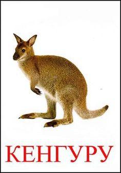Кенгуру картинка для детей Montessori Materials, Kangaroo, Education, Memes, Boys, Teaching Supplies, Preschool, Animals, Games