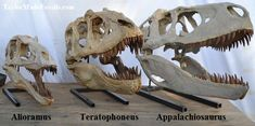 Skull casts of Alioramus, Teratophoneus and Appalachiosaurus. | Replicas http://www.angelfire.com/mi/dinosaurs/dinosaurs_trex.html#.U_l6K2Ndx8F