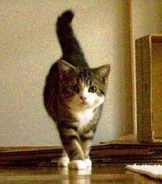Maru when he was a kitten  Oh my gosh look how skinny and little he was omg omg omg omg omg!!!