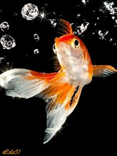 Ssss uhm this place is nice samissomar 39 s pinteress for Vente poisson rouge nice