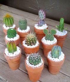 "4,347 Likes, 37 Comments - کاکتوس🌸ساکولنتcactus🌵succulent (@amin_hajimohamadi) on Instagram: ""📷 : @jenssuccs #🌵 #cactus #succulent #succulents #cacti #cacto #kaktus #кактус #サボテン #仙人掌 #선인장…"""