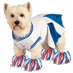 The Rubie's Cheerleader Halloween Dog Costume is going to pump up your team this Halloween for lots of treats! Blue and white cheer dress touch fastener closures along belly 4 pom pom feet tassels Mad
