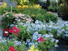 Low maintenance landscape texas flower beds ideas for 2019 Texas Landscaping, Modern Landscaping, Landscaping Plants, Front Yard Landscaping, Drought Tolerant Shrubs, Texas Plants, Cheap Plants, Texas Gardening, Low Maintenance Landscaping