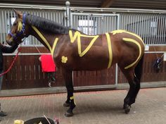 Equine kinesiology tape was developed for horses, but can also be used effectively on our 4-legged friends of all shapes and sizes