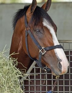 Union Rags - finished in earnings list of first-crop sires, sired many graded stakes winners and the 2017 Belmont place horse, Patch who raced despite having just one eye Most Beautiful Animals, Beautiful Horses, Derby Horse, Horse Therapy, American Pharoah, Derby Winners, Run For The Roses, Sport Of Kings, Thoroughbred Horse