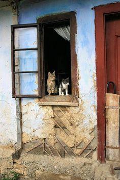 Sur le rebord de la fenêtre s'installent souvent nos fidèles compagnons !