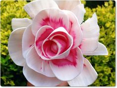 Különleges lakásillatosító! Rózsakert az otthonodban! Magic Flower, Diffuser, Rose, Garden, Flowers, Plants, Pink, Garten, Lawn And Garden