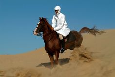 An Arabian horse in the desert near Dubai, UAE.