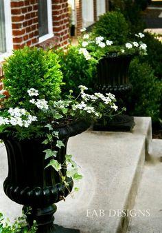 จัดสวนแบบอังกฤษ Garden Urns, Garden Planters, Outdoor Planters, Outdoor Gardens, Boxwood Planters, Topiary Plants, Boxwood Topiary, Topiaries, Potted Plants