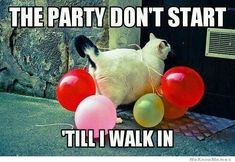 This cat knows how to party!