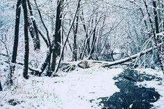 Winter - so simple so beautiful! - Jens #germany #photooftheday #rhoen #snowriver #instablogger #instabloggerstyle #travelblogger #wanderlust #dailyphotoblog #worldnomads #travellushes #travelbug #traveldiaries #travelphotos #sharetravelpics #travelphoto #travellife #globetrotter #deutschland #leicam #leicam240 #summicron35mm