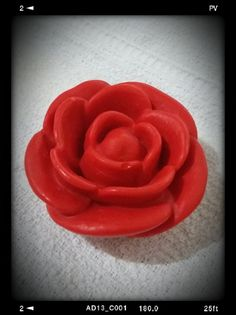 Rosa Provence Média - Avulsa.