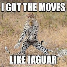 Image of: Animal Link Image Funny Animal Jokes Animal Puns Funny Puns Hilarious Jokes Zoo Pinterest 159 Best Clean Animal Memes Images Funny Animals Cut Animals