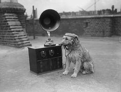 Dog listening to the radio, smoking a pipe