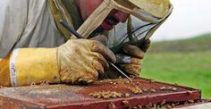 Μωσαϊκό: τι σκοτώνει τις μέλισσες
