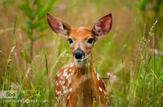 Morning Friend by Stoge. Please Like http://fb.me/go4photos and Follow @go4fotos Thank You. :-)