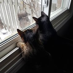 Two of our cats hanging at the window with a squirrel. http://ift.tt/2FF4cyw