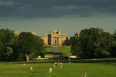 Blenheim Palace, where we spent an entire day exploring