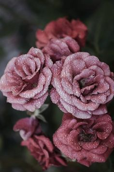 50+ Gorgeous Flower Aesthetic Wallpaper for your Iphone! - Prada & Pearls