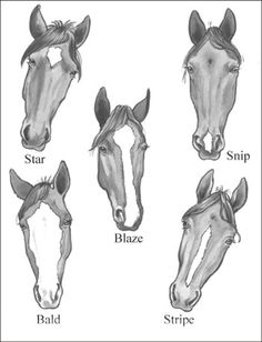 I personally like how they did this one. Horse marking with name