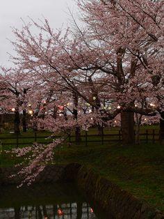 五稜郭公園 / Goryokaku Park by ys*, Hakodate, Hokkaido, Japan via Flickr