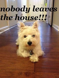 someone else wrote: Oh my word. This is Rocky!!!!!! (but it's also my Westie, and all dogs. ha)