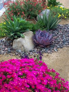 xeriscape plants, pink flowers, succulents