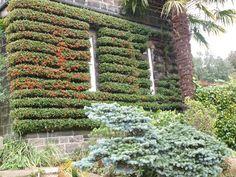 York Gate Garden, Leeds, U.K.