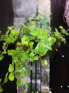 Love this plant..