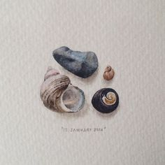 Lorraine Loots. 365 Postcards for Ants. Sea Shells in Watercolour. Fetish&fain | The Blog