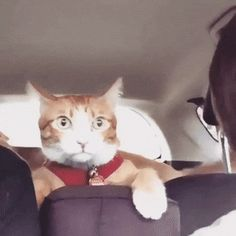 Road Trip, that poor Kitty looks so unsure and scared!  Look how he snuggles the dopey dog!!