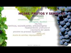 Uva. Nombre científico. Identificación, contenido y principios activos. Características generales de la planta de la Uva (Vitis vinifera) Propiedades medicinales atribuidas. Usos medicinales de las uvas. http://www.plantas-medicinal-farmacognosia.com/productos-naturales/uva-vitis-vinifera/