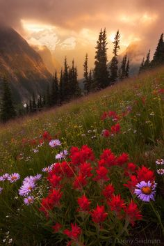 Nature's Paintbrush by Danny Seidman on 500px