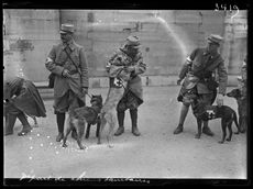 World War One. Ambulance dogs from Maisons-Laffitte and Samois heading to the front. Paris, Tuileries park, on May 14, 1915. Photograph published in the newspaper  Excelsior  of Saturday, May 15, 1915.