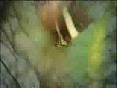 rowwen heze - vlinder voor Nicky Verstappen