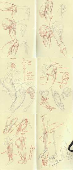 anatomy dump 1 by kakimari on deviantART via PinCG.com