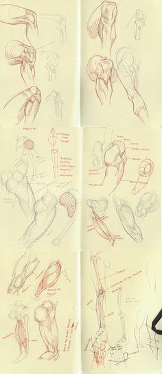anatomy dump 1 by kakimari on deviantART via PinCG.com