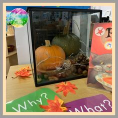 Eyfs Classroom, Classroom Ideas, Curiosity Approach Eyfs, Investigation Area, Curiosity Box, Discovery Box, Early Years Classroom, Foundation Stage, Behaviour Management