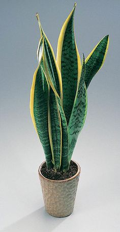 Lättskötta växter Mother In Law Tongue, Snake Plant, Cactus Plants, Indoor Plants, Nature, Mini Gardens, Ranch, Organizing, House