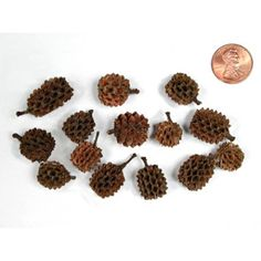 Bulk Apothecary is your source for manufacturer direct prices on all types of natural products including Casurina Pods Seed Pods, Native Plants, Potpourri, Seeds, Image, Biology, Decor, Plants, Decorating