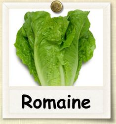 How to Grow Romaine Lettuce | Guide to Growing Romaine Lettuce