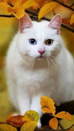 Pretty Cats, Beautiful Cats, Animals Beautiful, Animals For Kids, Animals And Pets, Cute Animals, Kittens Cutest, Cats And Kittens, Cat Plants