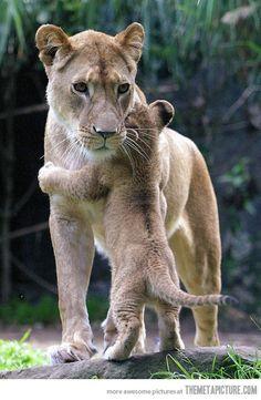 mamma abbraccia cucciolo