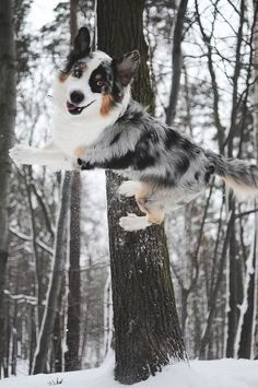 Border collie and over-achiever. ; )