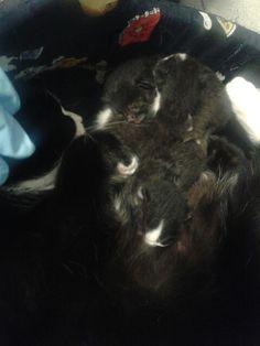 La mia gatta e i suoi nuovi cuccioli appena arrivati da poche ore .....amore